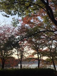2016.11.13 毛馬桜ノ宮公園-3.JPG